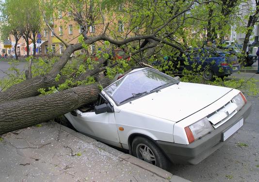 et træ er væltet ned over en bil